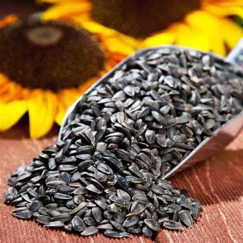 black sunflower seeds to horses ماذا تفعل حفنة من بذور دوار الشمس بجسم الإنسان