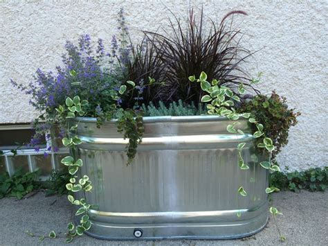 Water Trough Planters by Best 10 Galvanized Water Trough Ideas On