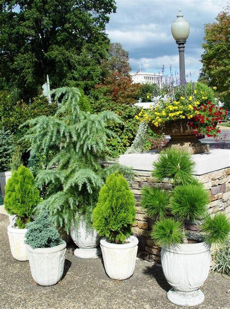 piante vaso piante sempreverdi da vaso resistenti al freddo e al caldo