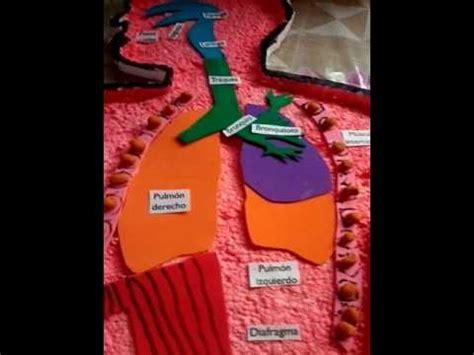como hacer una maqueta del sistema respiratorio el aparato respiratorio maqueta youtube
