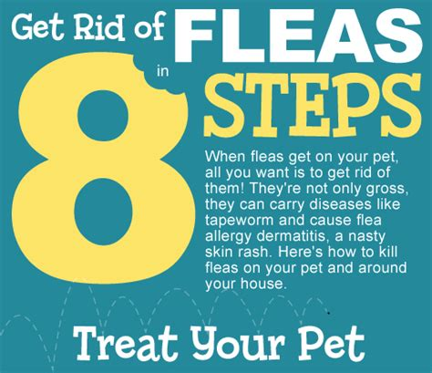 how to get rid of fleas in your bed get rid of fleas in 8 steps infographic petcarerx