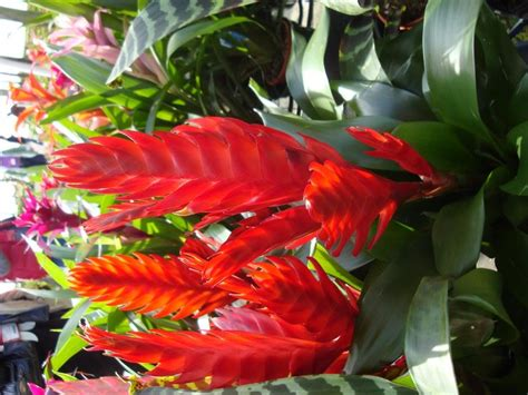 tropical plants florida tropical plants pictures and names back from tpie