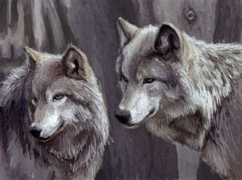 wolf s wolfpack images wolfs hd wallpaper and background photos