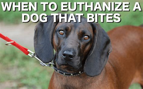 how to euthanize a when to euthanize a that bites three stories