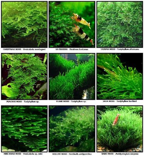 Lu T5 Untuk Aquascape Aquascape Cara Menanam Dan Menumbuhkan Moss