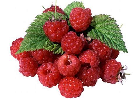 kandungan dan manfaat buah raspberry bagi kesehatan