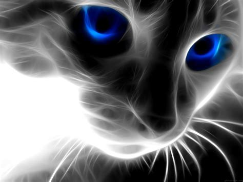 wallpaper blue eyes hd blue eyes cat wallpaper hd hd wallpapers