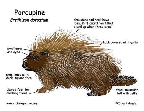 porcupine diagram porcupine