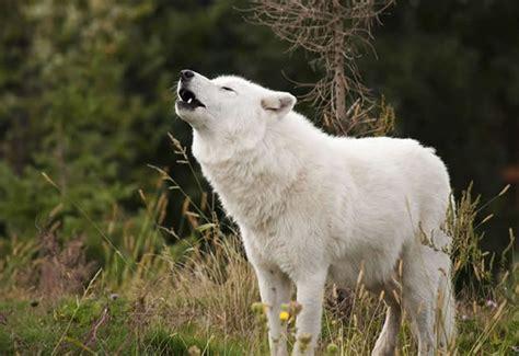 Enciclopedia animal   Animales de las regiones polares ...