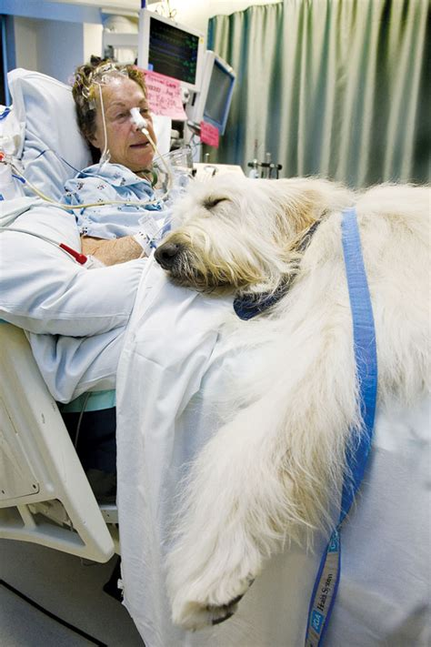 adopt a trained therapy therapy therapy animals