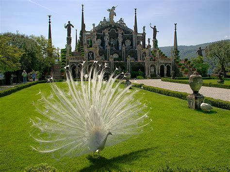giardini borromeo italian botanical heritage 187 isola palazzo borromeo