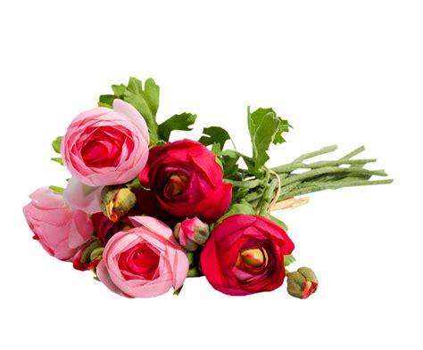 fiori fuxia fiori rosa fuxia