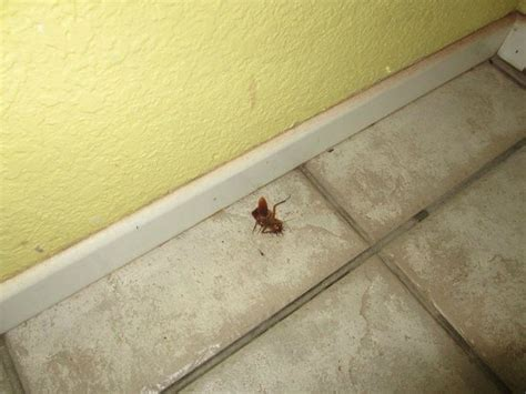 roaches in bathroom only 301 moved permanently