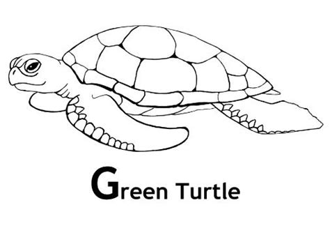 green sea turtle coloring pages and facts