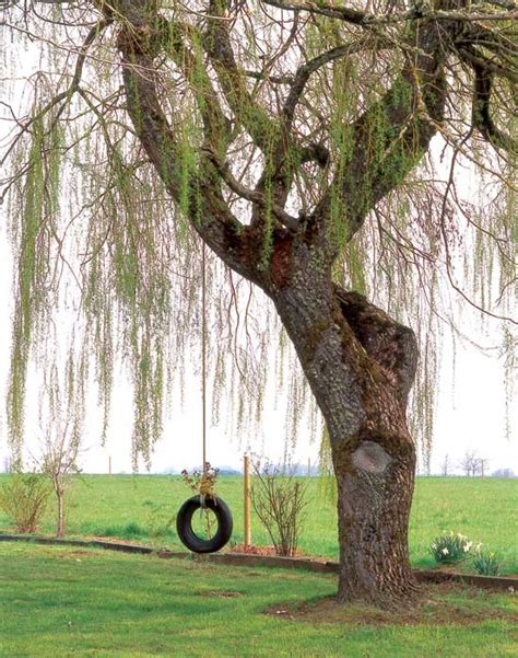 tree with tire swing how to plant a tree farm and garden grit magazine