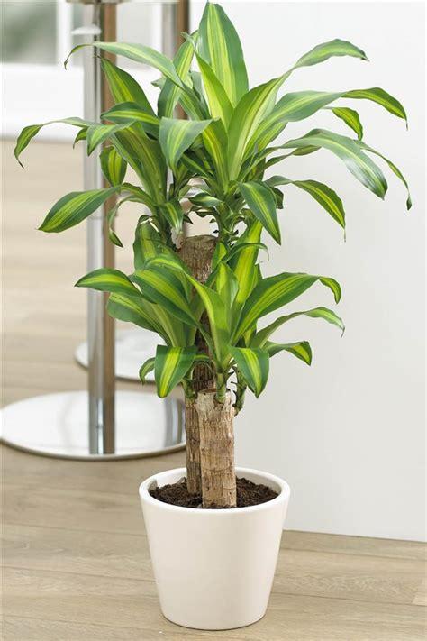plantas de interior sin luz 20 plantas de interior resistentes aptas para negados