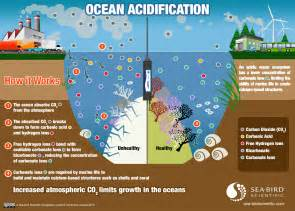 1000 images about ocean acidification on pinterest