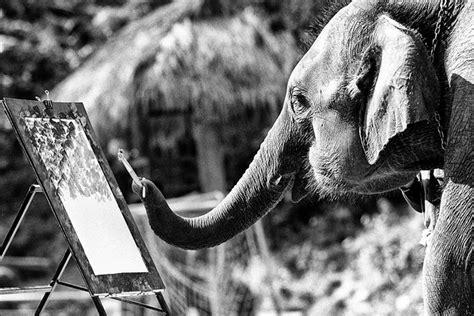 1325266736 des elephants et des hommes des 233 l 233 phants et des hommes j f mutzig art photo lab