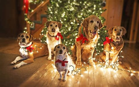 photo of dogs under the christmas tree hd christmas
