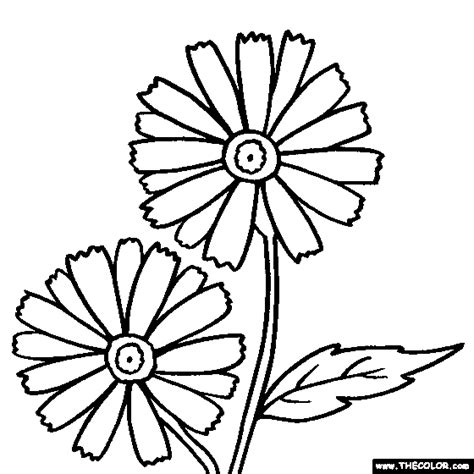 daisy flower coloring page flower coloring page