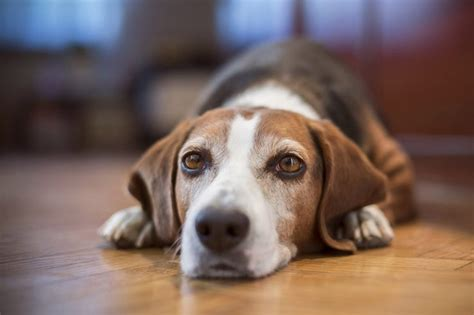 is vinegar bad for dogs using vinegar yogurt for yeast infections cuteness