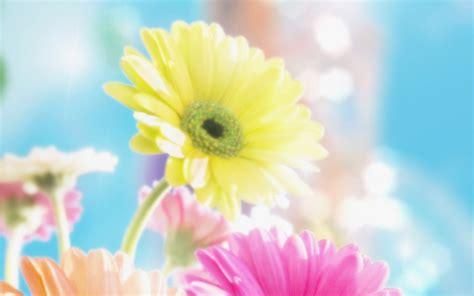 desktop wallpaper of flowers flowers for flower lovers flowers background desktop