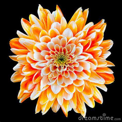 Gigis Garden by About Birthday Flowers Part 3 Gigi S Flower Garden