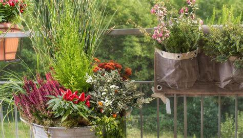 piante autunnali fiorite balcone d autunno le 10 piante pi 249 da coltivare a