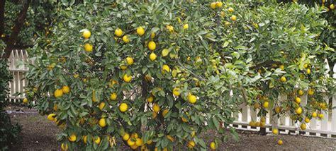 cross pollination fruit trees cross pollinate fruit trees