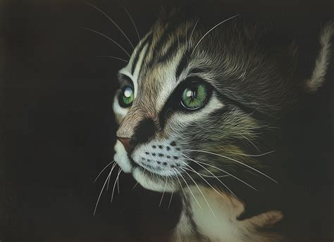 painting cat whiskers your wallpapers cats whiskers snout animals painting black