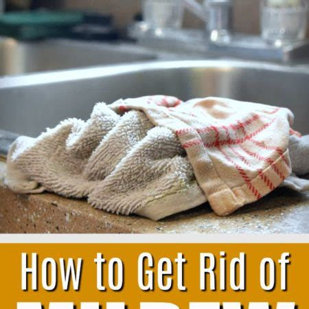 how to get rid of musty smell in house how to get rid of musty smell in kitchen cabinets how to get rid of mildew smell