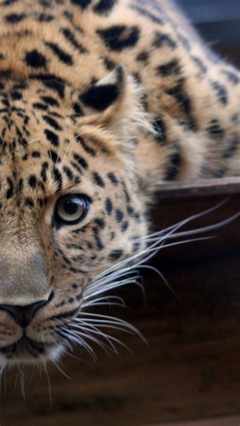 fotos animales wallpapers fondos de pantalla de animales para iphone
