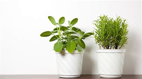 benefits of house plants david samadi md blog prostate health prostate cancer