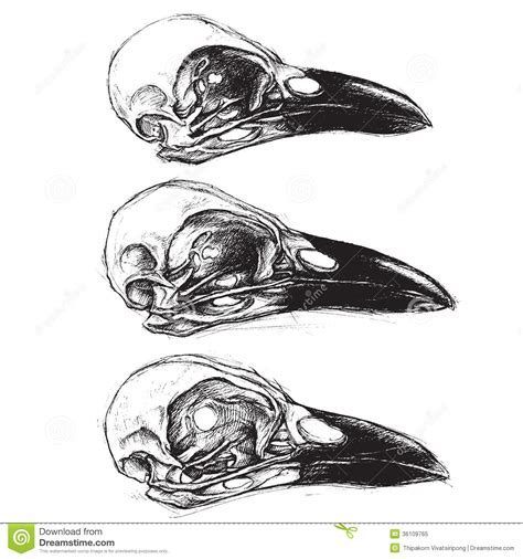 crow skull stock vector image of doodle decoration