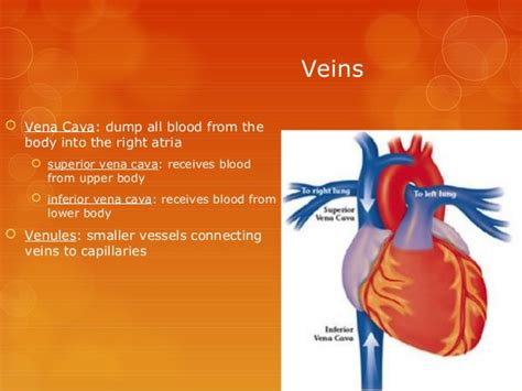 The Circulatory System Complete Info Ppt Circulatory System Powerpoint