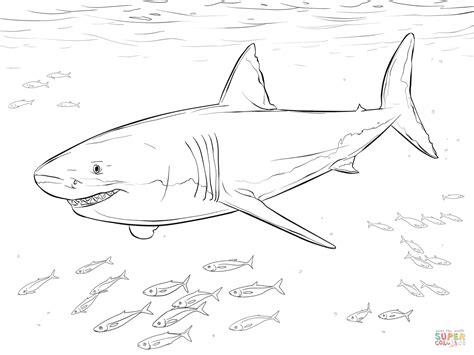 shark coloring book great white shark with pilot fishes coloring page free