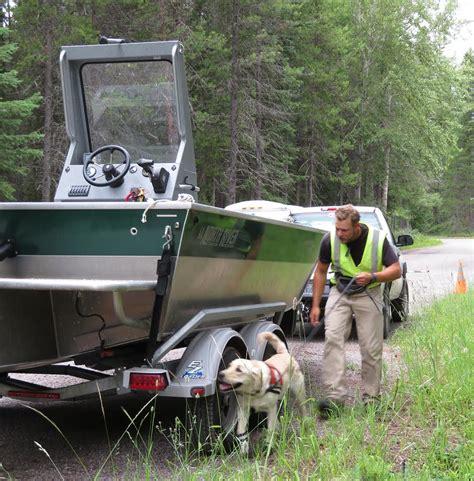 golden retriever species bark ranger helps park rangers keep animals and safe 171 american view