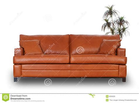 Small Brown Leather Sofa Brown Leather Sofa With Small Palm Tree Stock Photo Image 8230220