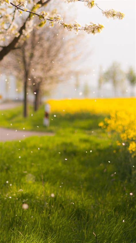 scenery blur flower ki green wallpapersc smartphone