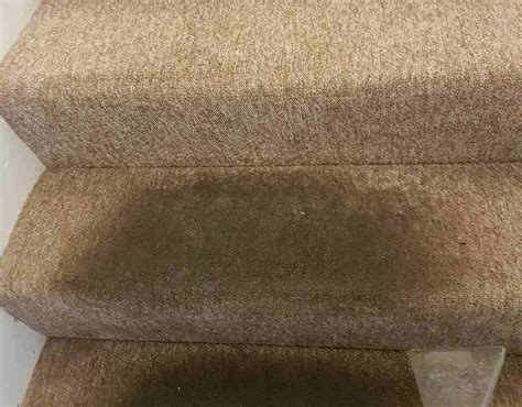 Rug Wash by Rug Cleaning In Norwood Se19 Premium 15