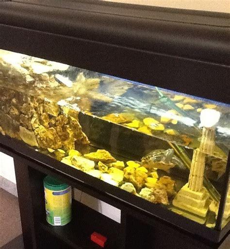 lada uvb per tartarughe d acqua la cura delle tartarughe acquatiche piccola guida per