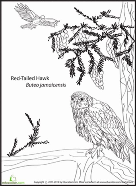 red tail colouring pages
