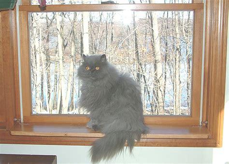 Window Shelf For Cat by Custom Built Window Shelf Cat Perch Kit From China Depot