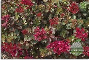 Hanging Flower Bags - vetplanten in de tuin ook als combinatie met