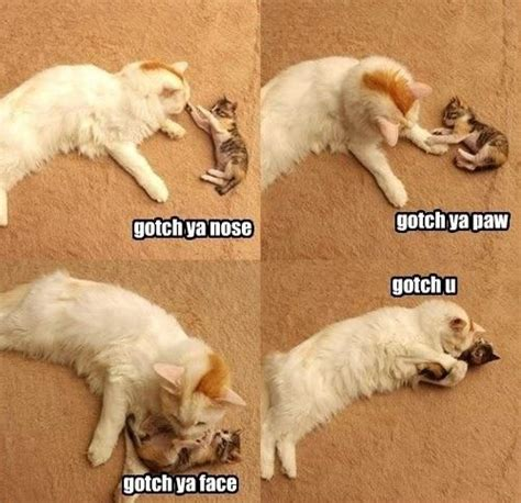 Cat Hug Meme - cat and kitten hugging jokes memes pictures