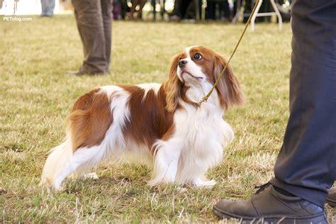 top 15 best breeds for children