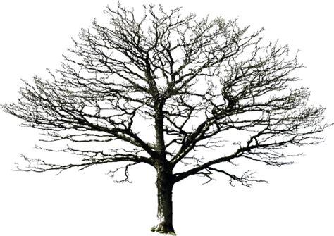 transparent tree on