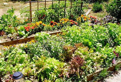 Plants Vegetable Garden Garden How To Plant A Vegetable Garden
