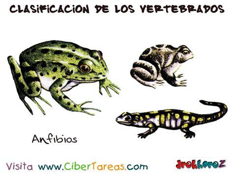 imagenes animales anfibios los anfibios clasificaci 243 n de los vertebrados cibertareas