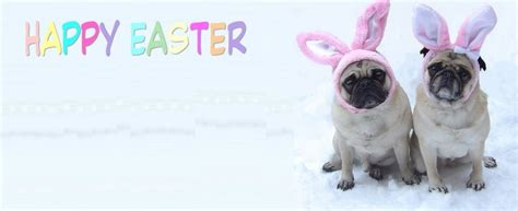 easter pug pictures covers images pug easter cover photo wallpaper and background photos